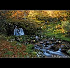 La vida fluye entre los mágicos hayedos otoñales (Jose Regueiro) Tags: rio river waterfall asturias redes cascada caso parquenatural hayedo brañagallones cordilleracantabrica