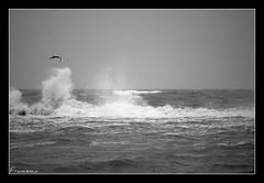 Mare d'inverno (*kikka83*) Tags: sea bw water blackwhite mare h2o bn acqua bianconero gabbiano libertà circolofotograficopaullese