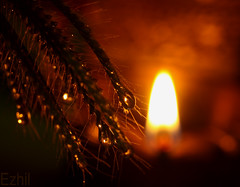 Let there be light..... (Ezhil Ramalingam) Tags: longexposure light macro lamp drops tripod refraction festivaloflights deepavali dcr250 explored festivaloflamps manfretto canon50draynox