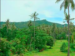 Palms and golf course - by maistora