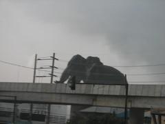 IMG_5700 (blokish) Tags: thailand zoo samutprakan