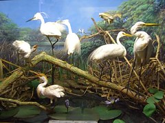 durban natural history museum - storks