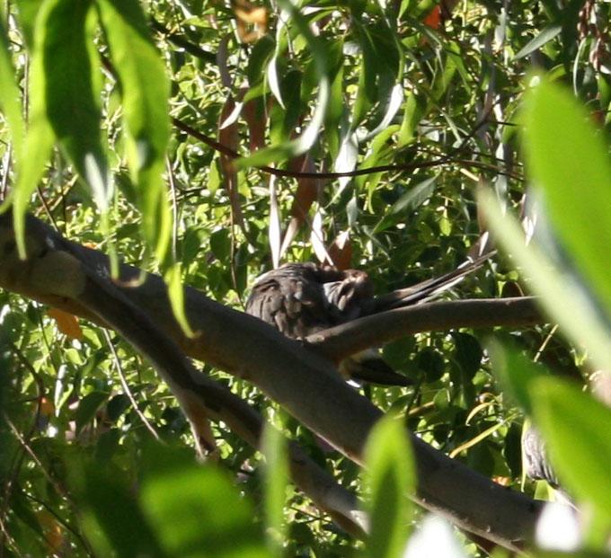 lintu aamupesulla