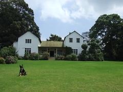 tea plantation 6 (lizziep2) Tags: dog kenya teaplantation