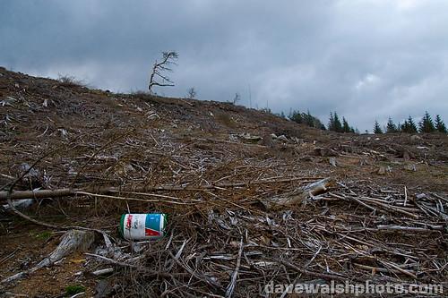 the wicklow way deforestation coillte Ireland mountains