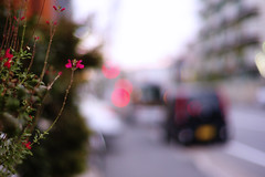 twilight (moaan) Tags: life street leica flower car digital 50mm evening dof bokeh dusk september m8 roadside taillight 2007 f12 wayside taillamp explored inlife leicam8 konicahexanon50mmf12 bokehwhores konicamhexanon gettyimagesjapanq1 gettyimagesjapanq2