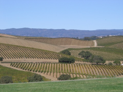 View from Artesa Winery.JPG