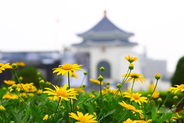 9802台北天燈行_107.jpg