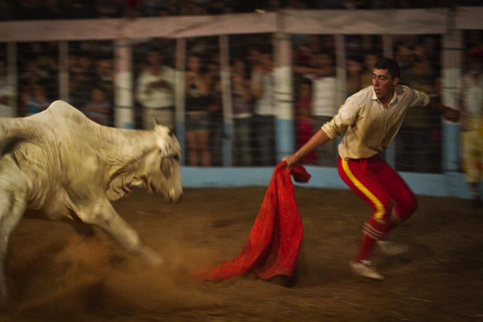 El toro enfurecido corre a gran velocidad hacia uno de los Hermanos Ledesma quien trata de esquivarlo. (15 de Agosto, Paraguay - Tetsu Espósito)