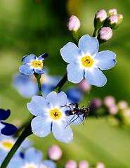 """Non dimenticherai, """"formica""""!"""