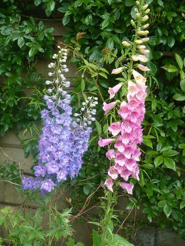 http://gardenerstips.co.uk/blog/