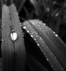 Under Pressure (mikeyexists) Tags: blackandwhite bw abstract water rain closeup photography photo blackwhite pittsburgh bokeh pennsylvania picture dewdrop photograph finepix waterdroplet artlibre bokehwhores