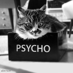 Psycho kitty (moggierocket) Tags: bw cats cute cat crazy eyes chat box fat evil gato psycho shoebox kedi supershot cc500 impressedbeauty
