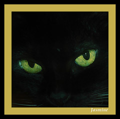 Jasmine - by Rickydavid