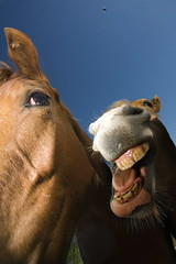 Going wild.... (Gilad Benari) Tags: horse nature animal animals israel funny different  gilad adlai      israelphotos benari homur  adifferentlookatisrael