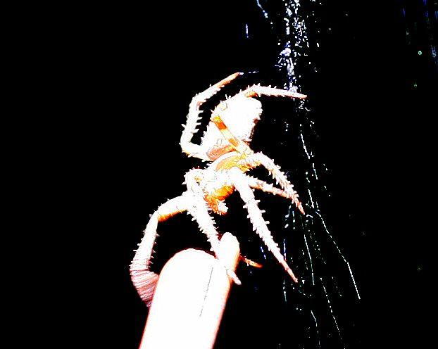 Spinder-ally Spider