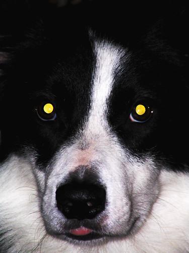 Ol' Yellow Eyes