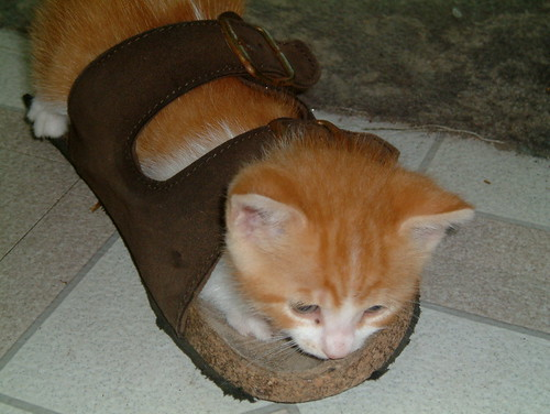 Kitten in sandle