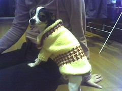 Bonnie in her new jumper
