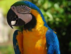 If I am elected (new125moneyman) Tags: color macro bird colors eyes flight beak feathers parrot upclose