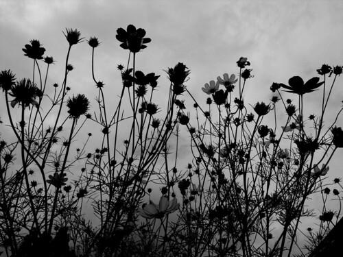 Glay Flowers