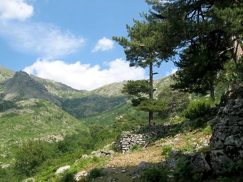 Haut vallon de Manganellu depuis les bergeries de Bassitone