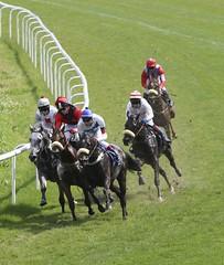 Around the Bend (Erin Butler) Tags: horse germany deutschland horseracing equestrian equine equus niedersachsen lowersaxony erinbutler