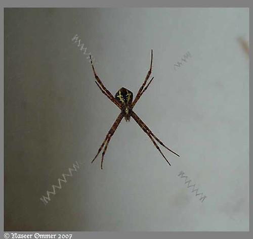 signature spider.jpg