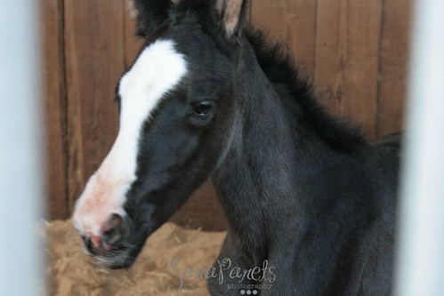 Brand new filly!