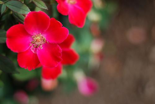 flowers 169