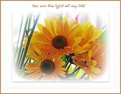 ~ You are the light of my life! ~ (Brenda Boisvert .) Tags: tgif 65 happybirthdayart anawesomeshot qualitypixels kunstplatzlinternational brendamb youarethrlightofmylife