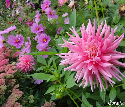 BlogJardin-101022-jardinNormandie-4