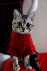 (w.wei) Tags: pet animal cat canon kitten kat chat gorgeous adorable kitty gato meow neko katze  gatto kot koka   katt kissa maka   aniki  pisic