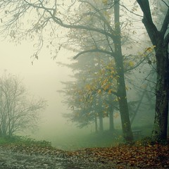 ESULI PENSIERI vestiti di nebbia.... (Claudia Gaiotto) Tags: autumn trees italy nature leaves fog square atmosphere lucca pisa tuscany monte serra nebbia autunno otono mygearandmepremium mygearandmebronze