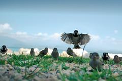 The Birds - by Rickydavid