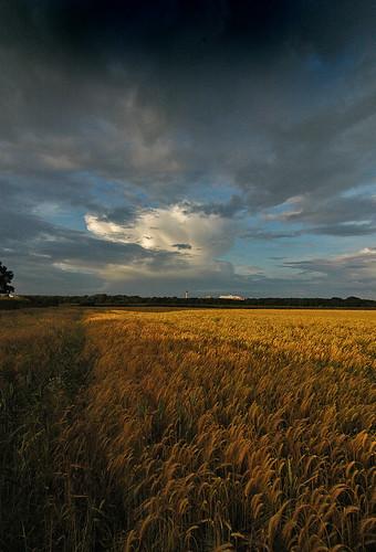Na de storm. Foto: Jimmedia - Creative Commons License