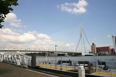 Erasmusbrug_3_by_mysticdemono (mysticdemon) Tags: bridge rotterdam erasmusbrug