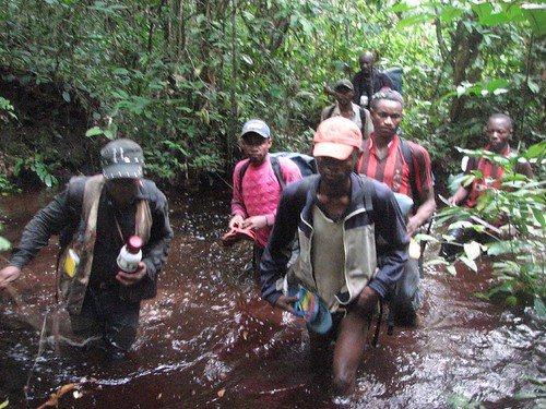 swamp forest south of Opala, Maurice team (he is on left)