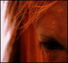 Gentle-Soul (Confused-Hair) Tags: horse horseseye gentlesoul abigfave anawesomeshot aplusphoto confusedhair