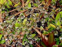 perles de pluie 1 - by OliBac