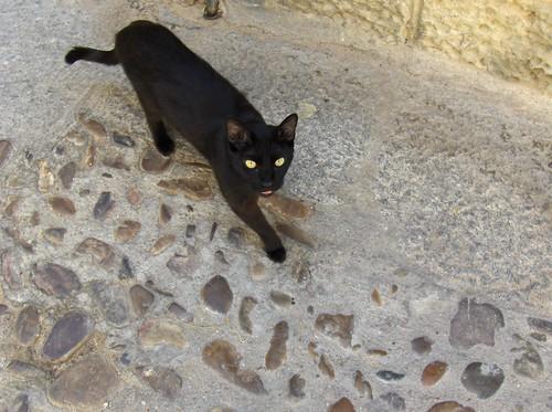 gatito castellano