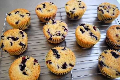 sunny blueberry corn muffins