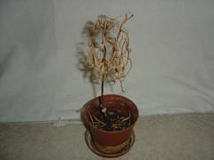 My Dead Plants (1)