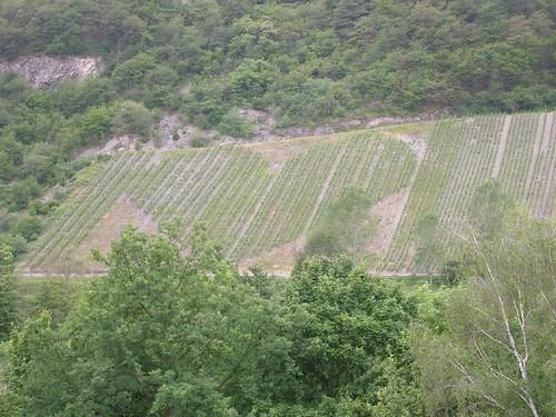 Love shape vineyard