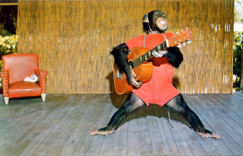 Elvis the Chimp, Monkey Jungle, Florida