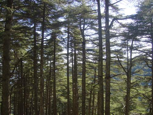 CHREA la forêt par vous