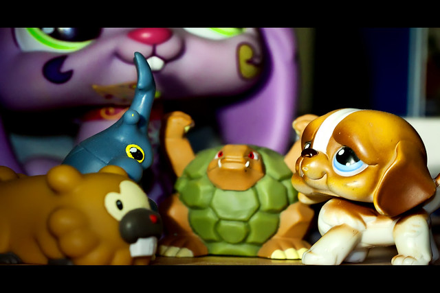 Toys story - Pet shop vs pokemons