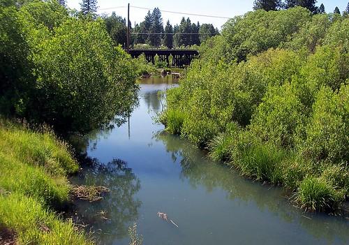 bridge, stream
