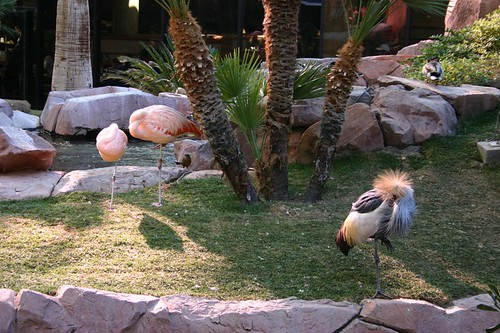image of the free wildlife habitat at the Flamingo Hotel in las vegas