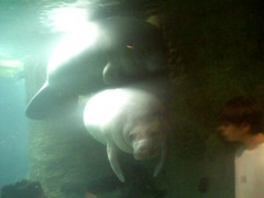 The Manatee Whisperer (2)